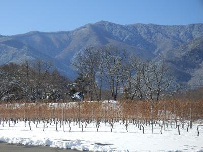 ぶどう畑と山.png