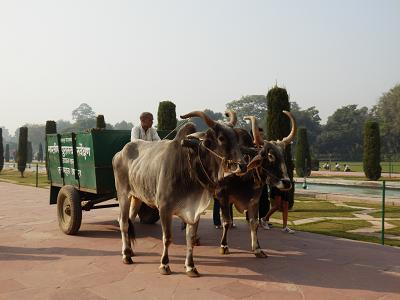 タージゴミ収集牛.png