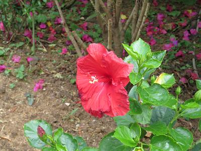 由布 亜熱帯植物園2.png