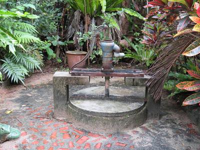 由布 亜熱帯植物園3.png