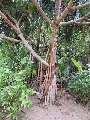 由布 亜熱帯植物園4.png