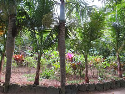 由布 亜熱帯植物園6.png